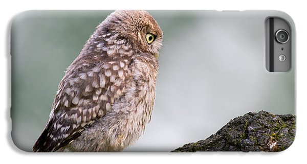 Little Owl Chick Practising Hunting Skills IPhone 6 Plus Case
