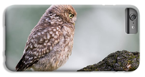 Little Owl Chick Practising Hunting Skills IPhone 6 Plus Case by Roeselien Raimond