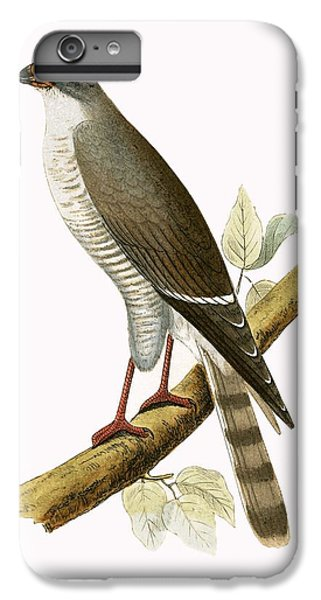 Little Red Billed Hawk IPhone 6 Plus Case by English School