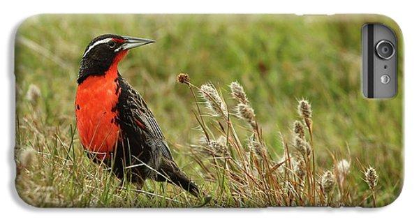 Meadowlark iPhone 6 Plus Case - Long-tailed Meadowlark by Bruce J Robinson