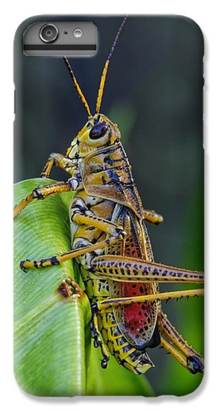Lubber Grasshopper IPhone 6 Plus Case by Richard Rizzo