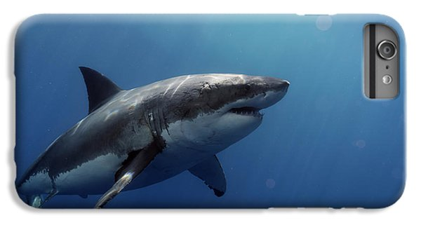 Lucy Posing At Isla Guadalupe IPhone 6 Plus Case by Shane Linke