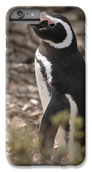 Magellanic Penguin No. 1 IPhone 6 Plus Case by Sandy Taylor