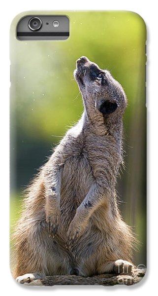 Meerkat iPhone 6 Plus Case - Magical Meerkat by Jane Rix