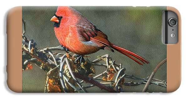 Male Cardinal IPhone 6 Plus Case by Ken Everett