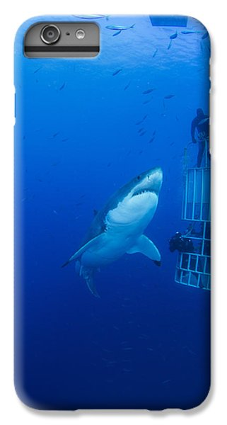 Sharks iPhone 6 Plus Case - Male Great White With Cage, Guadalupe by Todd Winner