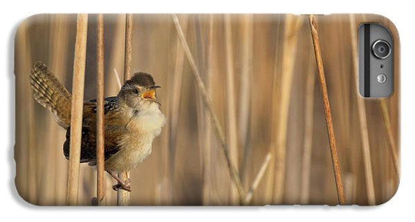 Marsh Wren Square IPhone 6 Plus Case by Bill Wakeley