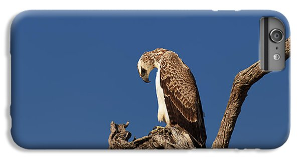 Eagle iPhone 6 Plus Case - Martial Eagle by Johan Swanepoel