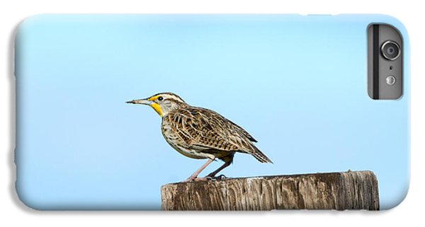 Meadowlark Roost IPhone 6 Plus Case by Mike Dawson