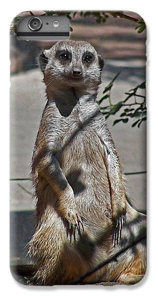 Meerkat 2 IPhone 6 Plus Case by Ernie Echols