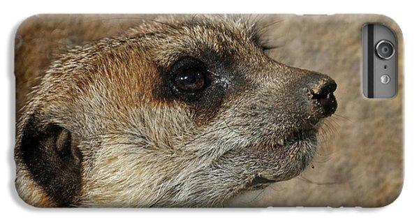 Meerkat 3 IPhone 6 Plus Case by Ernie Echols