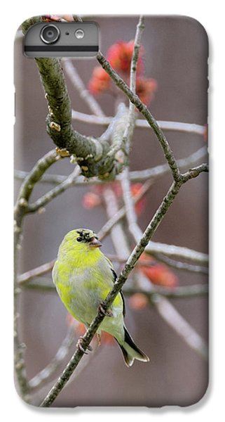 IPhone 6 Plus Case featuring the photograph Molting Gold Finch by Bill Wakeley