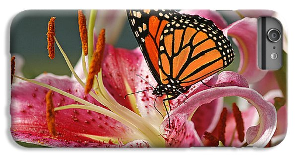 Lily iPhone 6 Plus Case - Monarch On A Stargazer Lily by Cindi Ressler