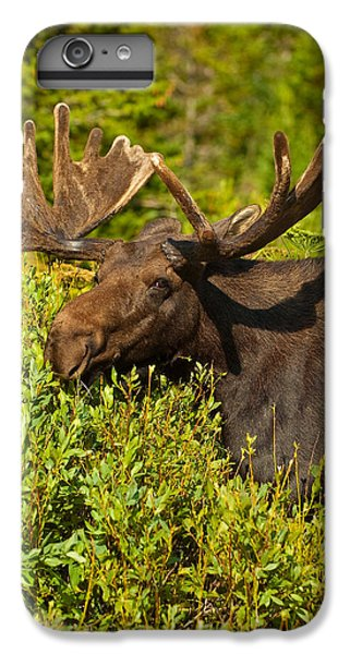 Moose IPhone 6 Plus Case by Sebastian Musial
