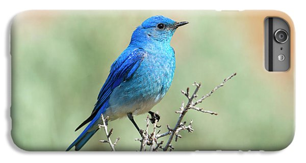 Mountain Bluebird Beauty IPhone 6 Plus Case by Mike Dawson