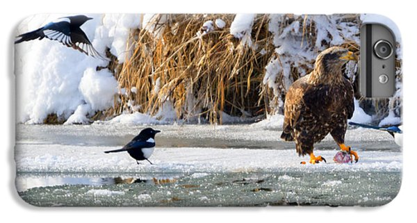 Magpies iPhone 6 Plus Case - My Lunch by Mike Dawson