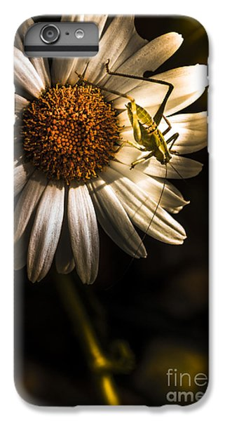Grasshopper iPhone 6 Plus Case - Nature Fine Art Summer Flower With Insect by Jorgo Photography - Wall Art Gallery