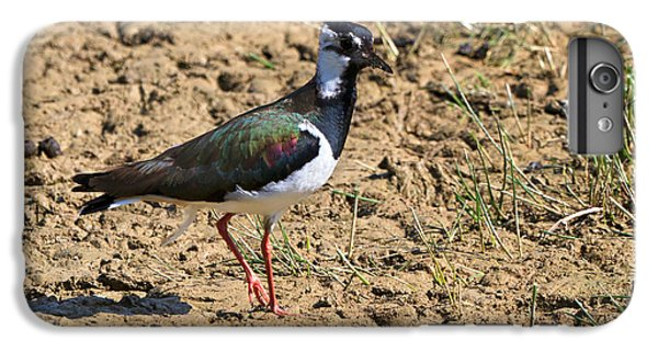 Lapwing iPhone 6 Plus Case - Northern Lapwing by Louise Heusinkveld