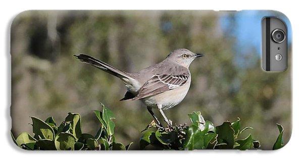 Northern Mockingbird IPhone 6 Plus Case by Carol Groenen
