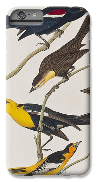 Nuttall's Starling Yellow-headed Troopial Bullock's Oriole IPhone 6 Plus Case