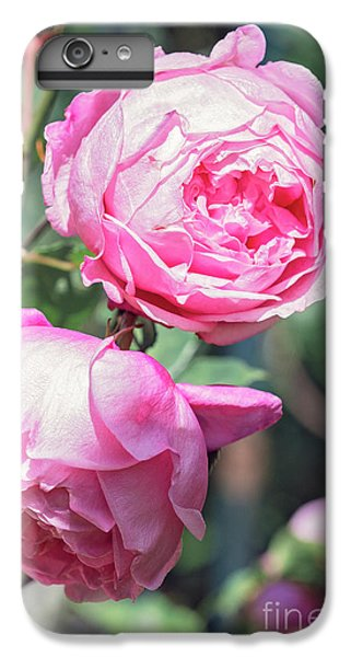 IPhone 6 Plus Case featuring the photograph One Bold, One Bashful by Linda Lees