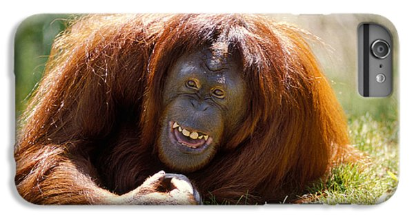 Orangutan In The Grass IPhone 6 Plus Case by Garry Gay