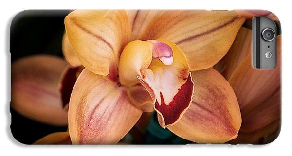 Orchid - A Quiet Elegance IPhone 6 Plus Case by Tom Mc Nemar