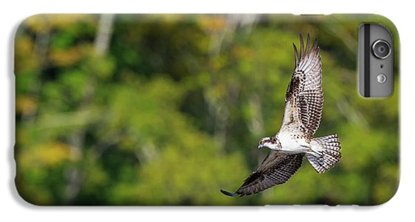 Osprey IPhone 6 Plus Case by Bill Wakeley
