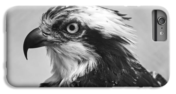 Osprey iPhone 6 Plus Case - Osprey Monochrome Portrait by Chris Flees