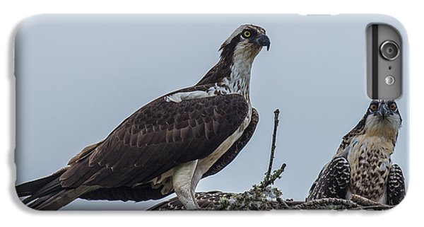 Osprey On A Nest IPhone 6 Plus Case by Paul Freidlund