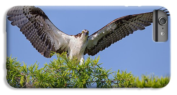 Osprey With Wide-open Wings IPhone 6 Plus Case
