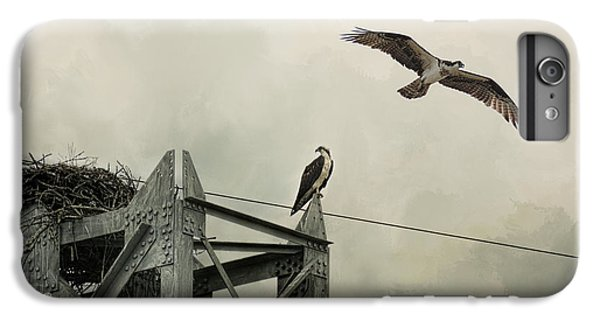 Ospreys At Pickwick IPhone 6 Plus Case