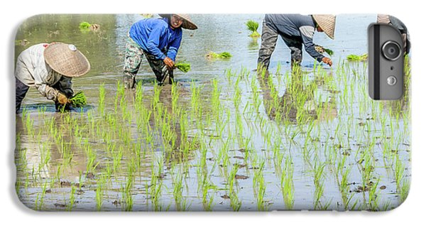 Paddy Field 1 IPhone 6 Plus Case by Werner Padarin
