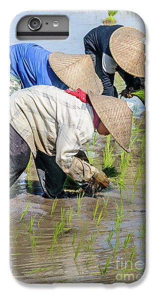 Paddy Field 2 IPhone 6 Plus Case by Werner Padarin