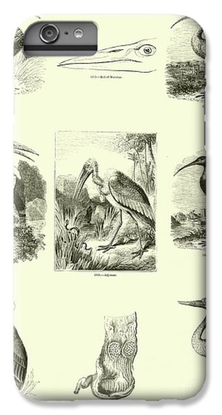 Page From The Pictorial Museum Of Animated Nature  IPhone 6 Plus Case by English School
