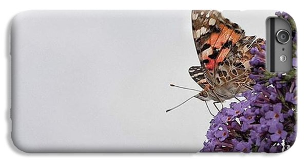Painted Lady (vanessa Cardui) IPhone 6 Plus Case