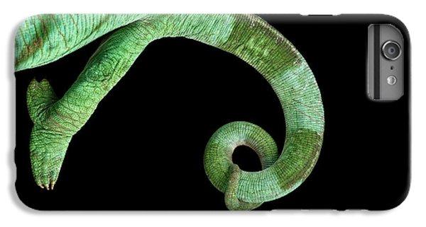 Parson Chameleon, Calumma Parsoni On Black Background, Top View IPhone 6 Plus Case by Sergey Taran