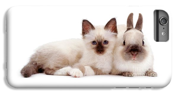 Birman iPhone 6 Plus Case - Perfectly Paired Pals by Warren Photographic