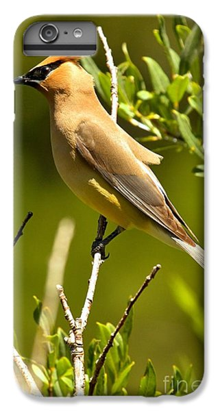 Perfectly Perched IPhone 6 Plus Case by Adam Jewell