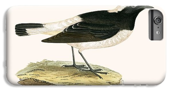Pied Wheatear IPhone 6 Plus Case by English School
