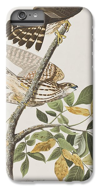 Pigeon Hawk IPhone 6 Plus Case