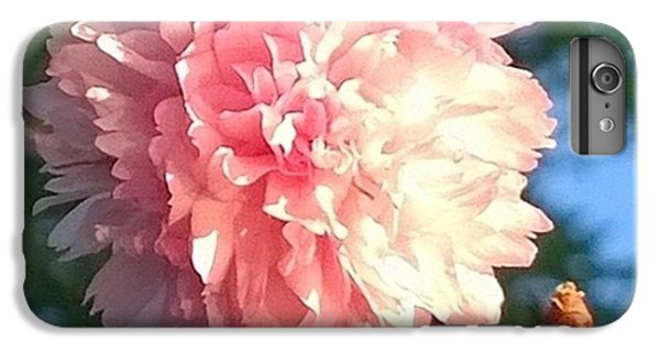 Pink Flower Bloom In Sunset. #flowers IPhone 6 Plus Case