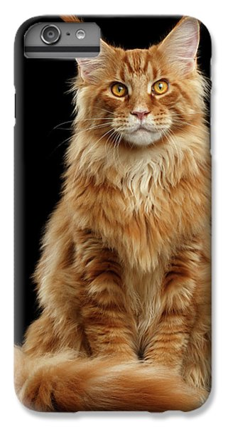 Cat iPhone 6 Plus Case - Portrait Of Ginger Maine Coon Cat Isolated On Black Background by Sergey Taran