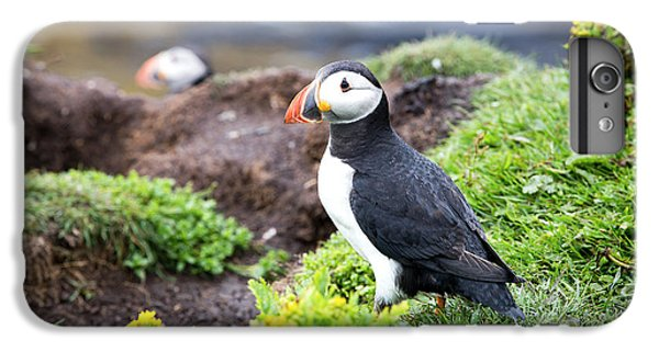 Puffin  IPhone 6 Plus Case