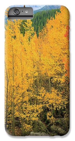 Pure Gold IPhone 6 Plus Case