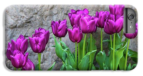 Tulip iPhone 6 Plus Case - Purple Tulips by Tom Mc Nemar