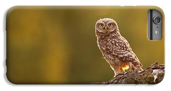 Qui, Moi? Little Owlet In Warm Light IPhone 6 Plus Case by Roeselien Raimond
