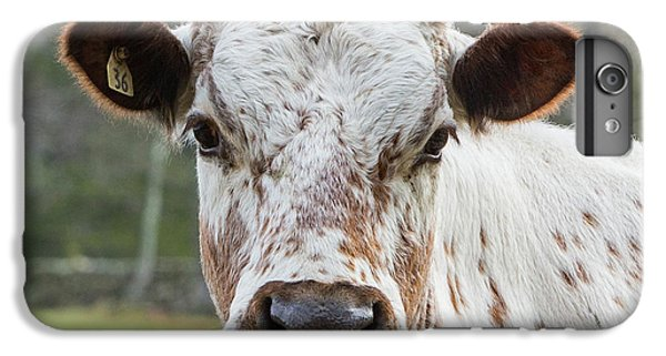 IPhone 6 Plus Case featuring the photograph Randall Cow by Bill Wakeley