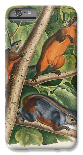 Red Bellied Squirrel  IPhone 6 Plus Case by John James Audubon