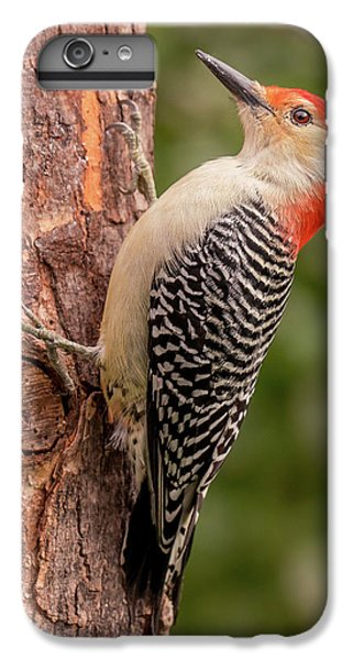 Red Bellied Woodpecker 3 IPhone 6 Plus Case by Jim Hughes